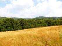 Wiese, Wald und Himmel Lizenzfreie Stockfotografie
