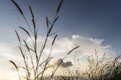Wiesen blüht Gras mit Himmelsonnenunterganghintergrund im Winter Stockbild