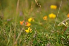 Wiesen-Blumen Stockbilder
