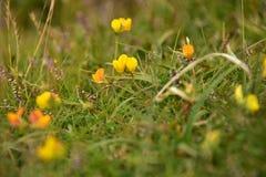 Wiesen-Blumen Lizenzfreies Stockfoto