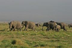 Wiesen des afrikanischen Elefanten in Kenia Lizenzfreies Stockbild
