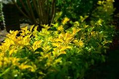 Wiesen des gelblichen Grüns Stockbilder