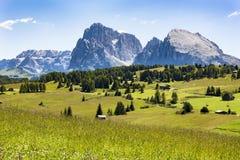 Wiesen Dolomites Alpe di Siusi, Süd-Tirol stockfoto