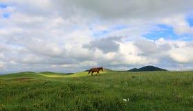Wiesen in Innere Mongolei China Lizenzfreies Stockbild