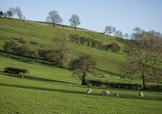 Wiesen, Schafe und blauer Himmel, Höchstbezirk, England stockbilder
