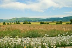 Wiesen und Blumen Stockfoto