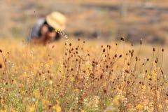 Wiesen und Blumen lizenzfreie stockfotografie