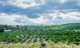 Wiesen und Felder, Ackerland-Landschaft Lizenzfreies Stockbild