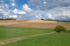 Wiesen und Felder im Sommer Stockfotografie