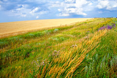 Wiesen- und Feldlandschaft des grünen Grases stockfoto