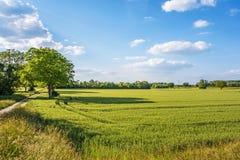 Wiesen- und Maisfeld, ländliche Landschaft Stockfotos