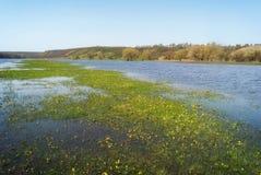 Wiesen und Weiden im hügeligen Tal überschwemmten mit einem Frühlingsflussstrom Blumeninselkleine insel mitten in dem Wasser Stockfotos