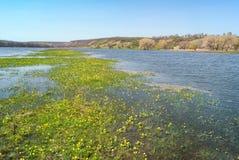 Wiesen und Weiden im hügeligen Tal überschwemmten mit einem Frühlingsflussstrom Blumeninselkleine insel mitten in dem Wasser Lizenzfreie Stockbilder