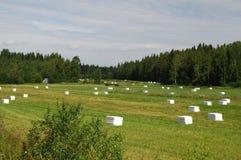 Wiesen von NordSavonia in Ostfinnland Stockfoto