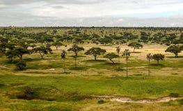 Wiesen von Tansania stockbilder
