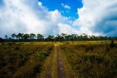Wiesen-Weg mit blauem Himmel und Wolke, Nationalpark Phu Kradueng, Thailand Stockfotografie