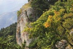 Wiesenbereich an der Spitze des Berges im Wald Lizenzfreie Stockbilder