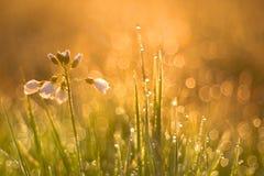 Wiesenblumen Lizenzfreies Stockfoto