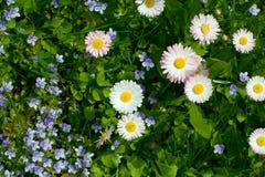 Wiesenblumen Stockfotografie