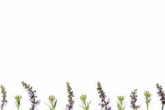 Wiesenblumen auf weißem Hintergrund stockfoto
