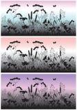 Wiesenblumen, -gras und -schmetterling an der Dämmerung Stockfotos