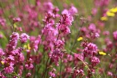 Wiesenblumen im Sommer Lizenzfreies Stockfoto