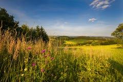 Wiesenblumen und Moravian-Landschaft Stockfoto