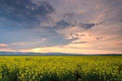 Wiesenfeld bei Sonnenuntergang Stockbild