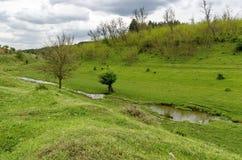 Wiesenfeld und kleiner Fluss in Zavet-Stadt Stockbilder