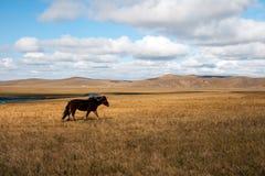 Wiesenherbstlandschaft in China Lizenzfreies Stockbild