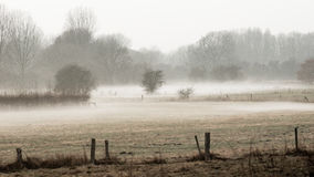 Wiesenlandschaft im Nebel stockfotos