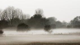 Wiesenlandschaft im Nebel Lizenzfreies Stockbild