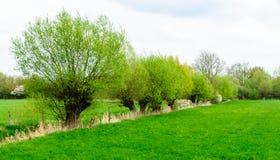 Wiesenlandschaft mit Abzugsgraben Stockfoto