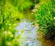 Wiesennebenfluß mit grünem Gras Stockfoto