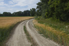 Wiesenstraße mit Weizen Lizenzfreies Stockfoto