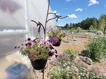 Wieszać rośliny szklarni ścianą Fotografia Royalty Free