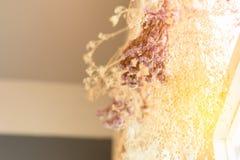 Wieszać wiązka suchy kwiat trawa i Obraz Royalty Free