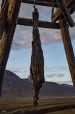 Wieszać foki carcase w Longyearbyen Obraz Stock
