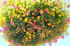 Wieszający roślinę Ozdabia plac Obrazy Stock