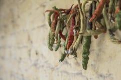 Wieszający zieleni pieprze po to, aby suszyć Obrazy Royalty Free