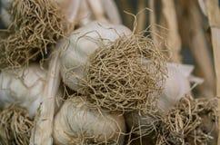 Wieszający garlics Zdjęcia Stock