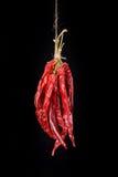 Wieszający Przypala Chili pieprze Obraz Stock