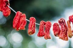 Wieszający Susi Chili pieprze Fotografia Stock