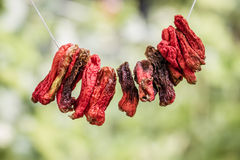 Wieszający Susi Chili pieprze Fotografia Royalty Free