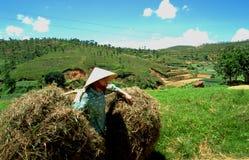 Wietnam: Średniorolny kobiet pracować twardy na polach w Dalat mieście fotografia royalty free