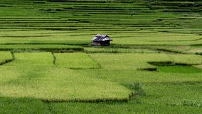 Wietnam Zdjęcie Stock