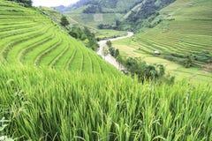 Wietnam Zdjęcia Stock