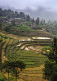 Wietnam Zakaz Pho: W górach zima krajobraz Zdjęcie Stock