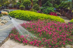 Wietnamska kobiety ogrodniczki podlewania trawa i rośliny w parku Obrazy Royalty Free