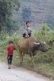 Wietnamski dziecko na Wodnym bizonie zdjęcie royalty free